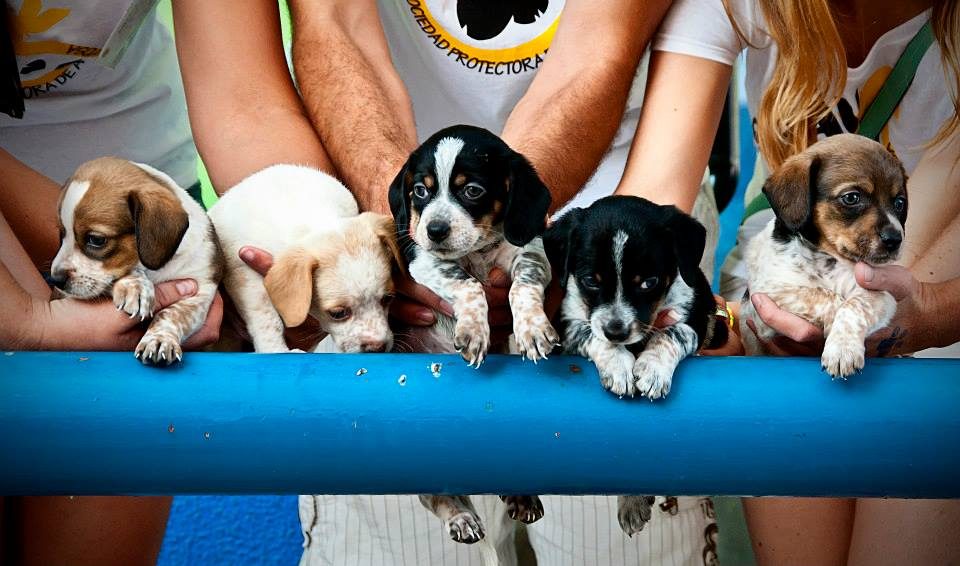 La asociación protectora de animales busca casas de acogida para una decena de perros