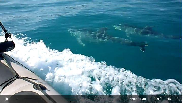 Un informe ministerial desaconseja las prospecciones petrolíferas por su impacto sobre los cetáceos