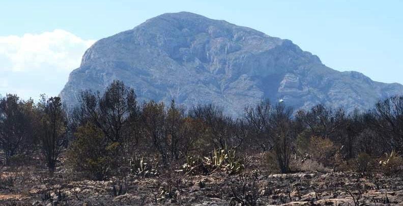 La peor catástrofe del Montgó en más de una década