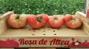 Rosa de Altea (1) [1600x1200]