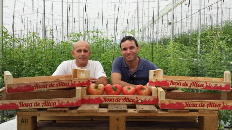 'Rosa de Altea', rescatado el sabor del tomate auténtico