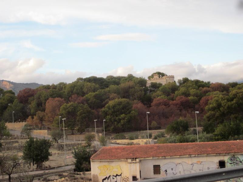 El barrenillo entra en La Marina Baixa, territorio fuera de la orden ... - La Marina Plaza. Noticias. Diario de la Marina Alta y Baixa.