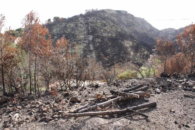 """Un estudio universitario alerta: la extracción de madera quemada en el Montgó puede tener """"mayor impacto que el propio incendio"""""""