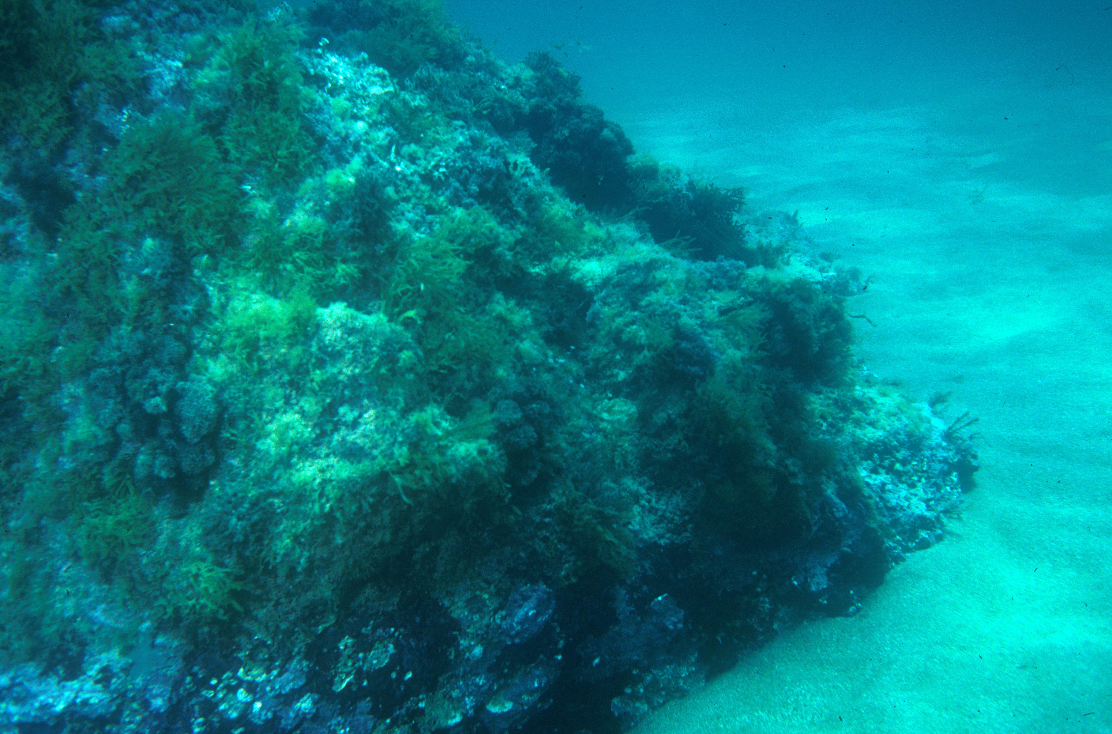 Paisajes submarinos: Sol Invictus
