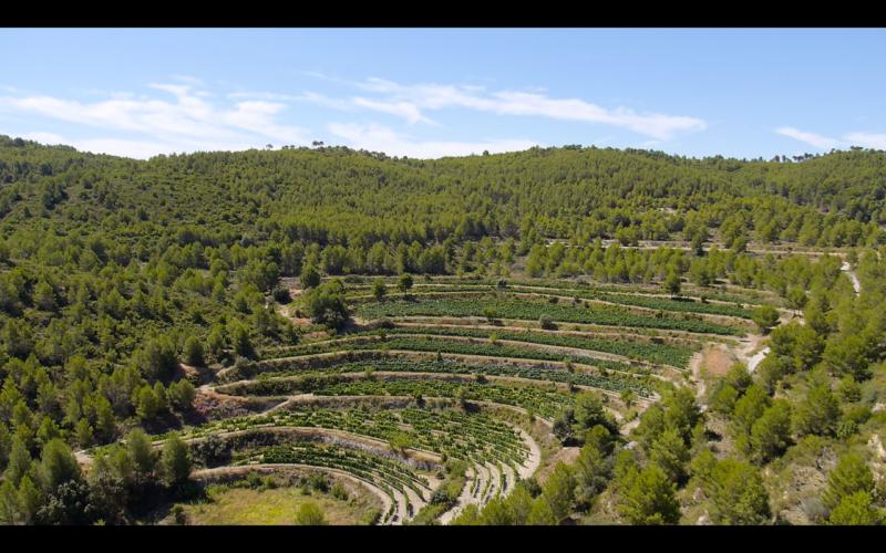 Vista de las terrazas del viñedo del Mas la Real de Sella.