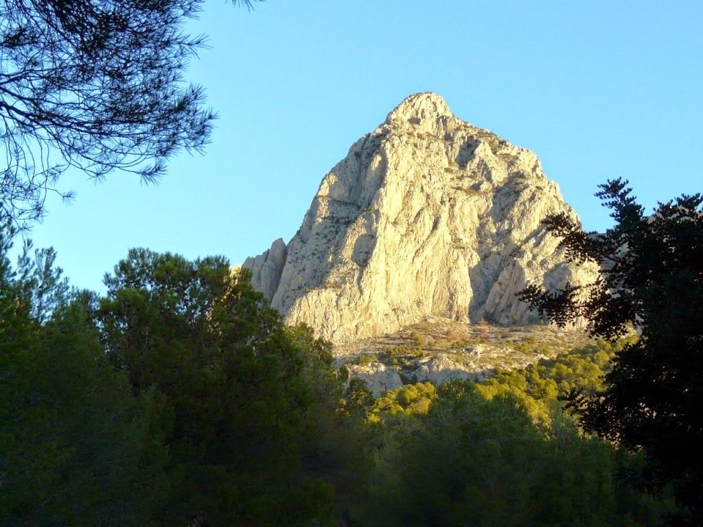 Reforestación de árboles para las zonas quemadas del Puig Campana para compensar emisiones de CO2