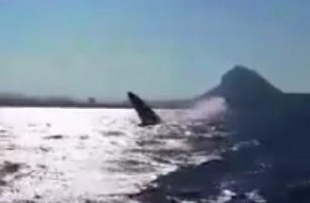 [VÍDEO] El impresionante salto de una ballena frente al Montgó