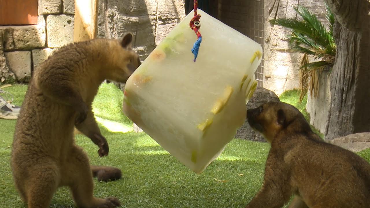 Polos gigantes para alimentar a los animales