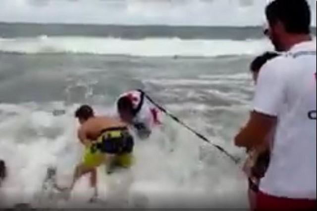 [VÍDEO] Trágico final para un delfín desorientado en el puerto de Dénia