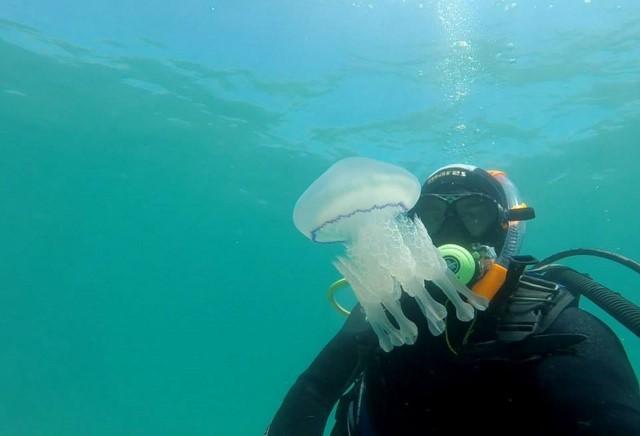 Imagen submarina de los trabajos de investigación en la costa de Dénia.