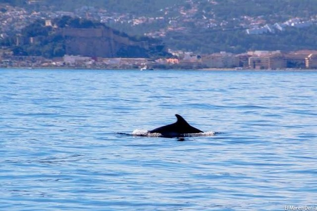La foto que le faltaba al delfín: con el castillo de Dénia