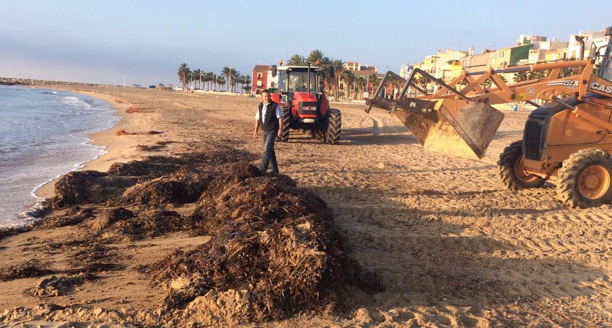 La Vila retira 480 toneladas de algas de la Playa Centro tras los últimos temporales