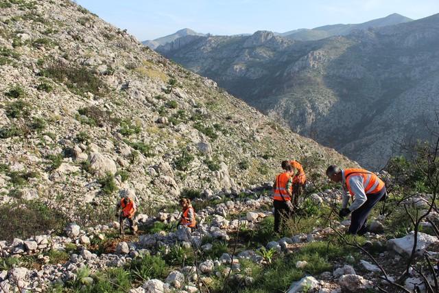 Cuatro mil árboles para regenerar 8 hectáreas del incendio de Pego y les Valls