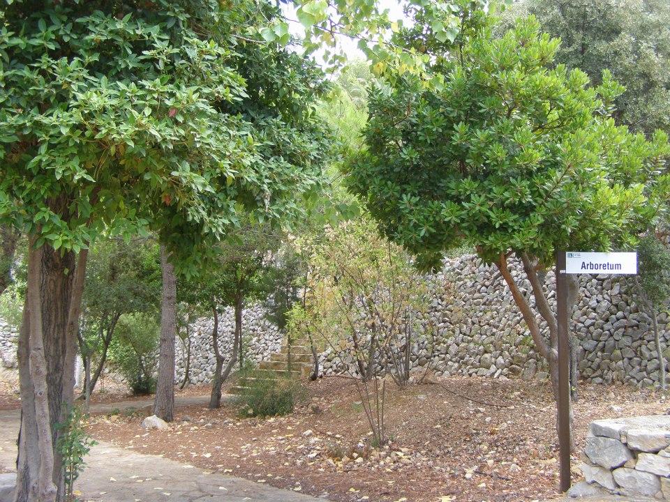 Callosa quiere revitalizar el 'Arboretum' de les Fonts de l'Algar abandonado desde hace años
