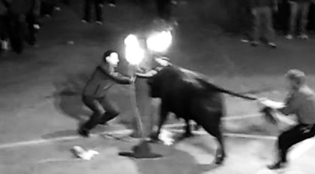 [Vídeo] Benissa (PP) mantiene el bou embolat al contrario que Xàbia, Ondara o Benitatxell