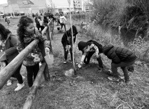 Alumnos del CEIP Sanchis Guarner de Ondara plantan árboles en el Xopar