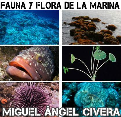 fauna-flora-marina