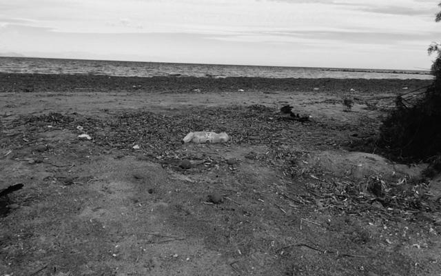 La playa para perros se habilitará junto a la escollera norte del puerto de Dénia