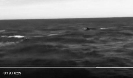 El espectáculo del paso de las ballenas soprende a los bañistas de les Rotes de Dénia