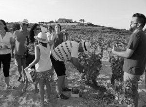 'Atardecer entre Viñedos', naturaleza en estado puro en Benitatxell