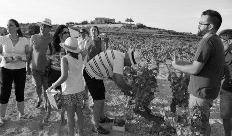 'Capvespre entre Vinyes', natura en estat pur a Benitatxell