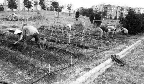 Dénia transforma en huerta los terrenos llenos de maleza del Bosc de Diana