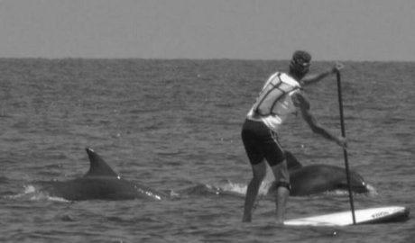 [Vídeo/Fotogalería] Cinco avistamientos de ballenas y delfines frente a Dénia y Xàbia