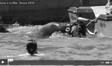 """El Pacma difunde un vídeo y fotos de los Bous a la Mar de Dénia para denunciar en toda España la """"crueldad"""" del festejo"""