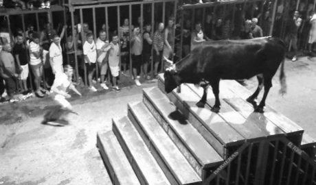 Un niño de 7 años herido tras caer de una barrera de els Bous de Calp y una adolescente sufre un revolcón de un toro
