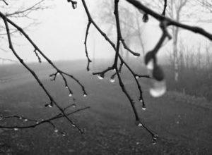 Llàgrimes de pluja