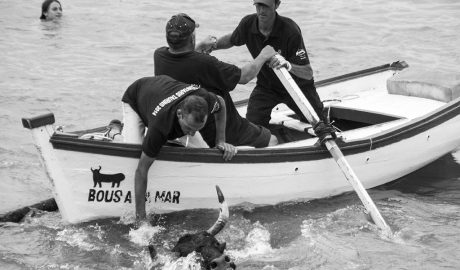 Un juzgado admite a trámite una denuncia contra los Bous a la Mar de Dénia por maltrato animal y falta de seguridad