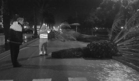 [EL DÍA DESPUÉS] Xàbia inspeccionará los daños en la Grava, la Granadella y las palmeras de l'Arenal