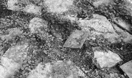 [VÍDEO] Destrozos en viviendas del Montgó en Dénia por la entrada de jabalíes en los jardines
