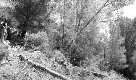 Talan pinos y reducen masa arbustiva en el Montgó de Dénia para aminorar el riesgo de incendios