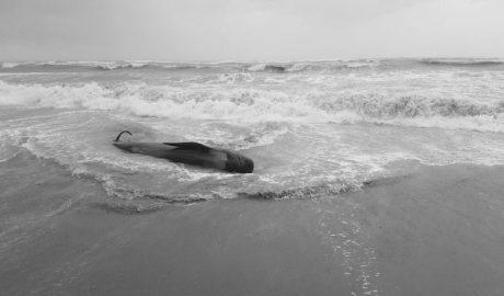 Los expertos creen que el calderón varado en Dénia estaba muy débil para luchar contra el temporal
