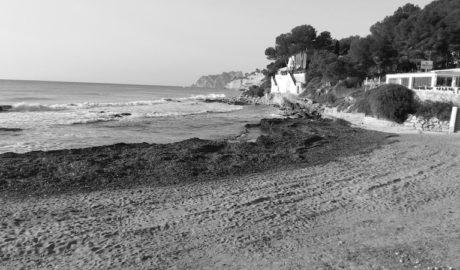 Teulada mantendrá hasta abril las algas en sus playas para conservar la arena
