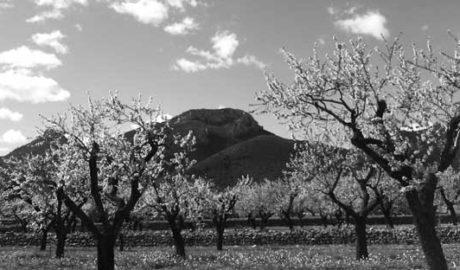 Arranca 'Feslalí', gastronomia i oci amb l'ametller en flor com a protagonista