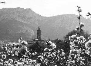 [LA FOTO] El espectáculo de los cerezos en flor de la Vall de Gallinera