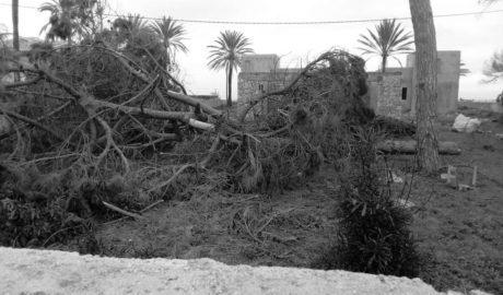 Los vecinos denuncian la tala de pinos en la parcela lindante con el polémico proyecto de Las Olas en Dénia