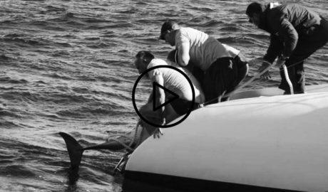 [VÍDEO] Un grupo de delfines mulares ataca y mata a un delfín listado en aguas de Dénia