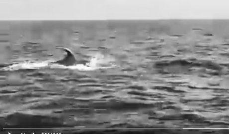 [VÍDEO] La Policía de Xàbia patrulla entre delfines frente a la Cova Tallada