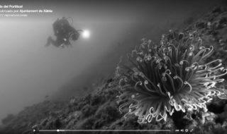 [VÍDEO. Exposició a Xàbia] Així són els fons marins del Portitxol