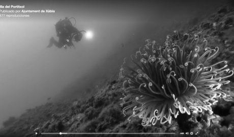 [VÍDEO. Exposición en Xàbia] Así son los fondos marinos del Portitxol