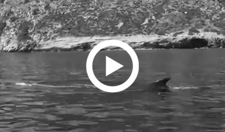 [VÍDEO] Avistan hasta 8 ballenas rorcual en solo una mañana entre Dénia y Xàbia