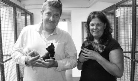 Benitatxell llama a adoptar los 11 gatos rescatados de una caja precintada