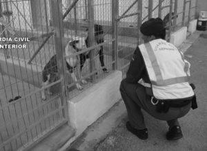Prisión sin fianza para el propietario de los perros que mataron a un hombre en Beniarbeig