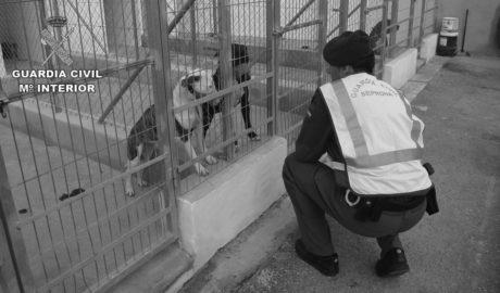 Presó sense fiança per al propietari dels gossos que van matar un home a Beniarbeig