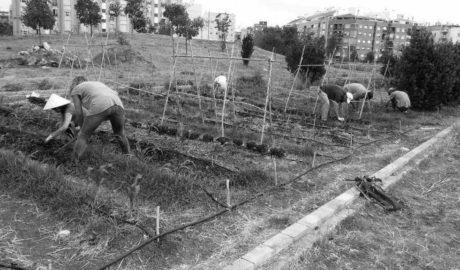 Dénia pone en marcha el Banco de Tierras para promover la agricultura y la salida de sus productos en el mercado local