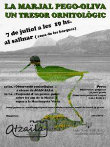 Trobada d'observació ornitològica: 'La Marjal Pego - Oliva, un tresor ornitològic' -Pego- @ Al salinar de la Marjal de Pego Oliva -zona de les barques-