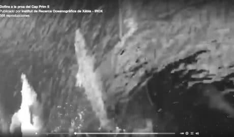 [VÍDEO] Espectacular baile de delfines frente a un pesquero de Xàbia